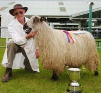Teeswater hogg takes top prize