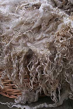 Raw wool Teeswater fleece